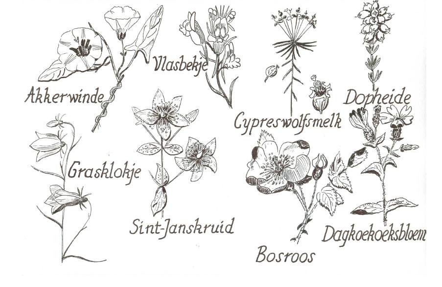 Planten met enkelvoudige bladeren