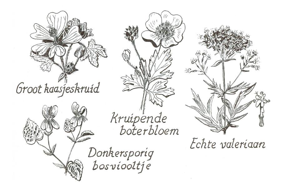 plantenfamilies_3