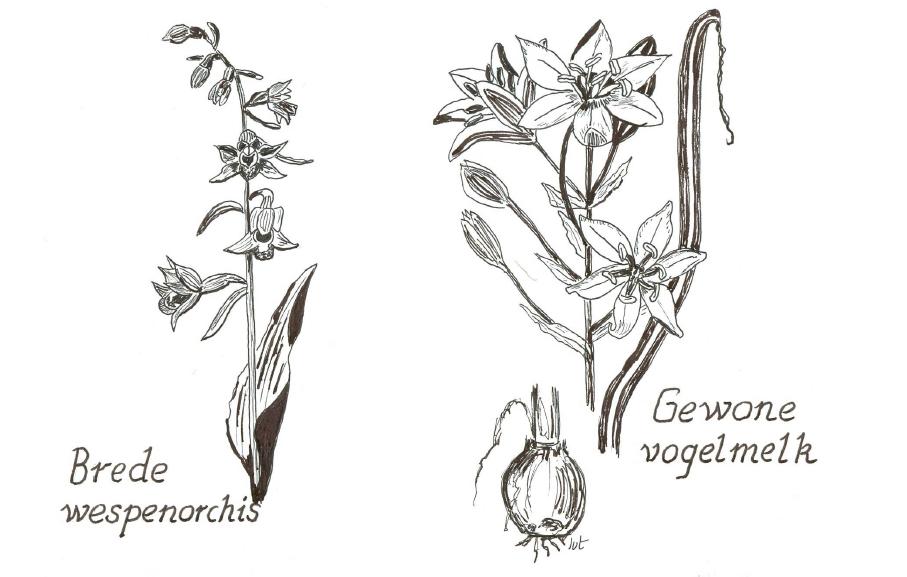 plantenfamilies_4