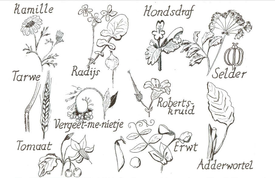 plantenfamilies_1